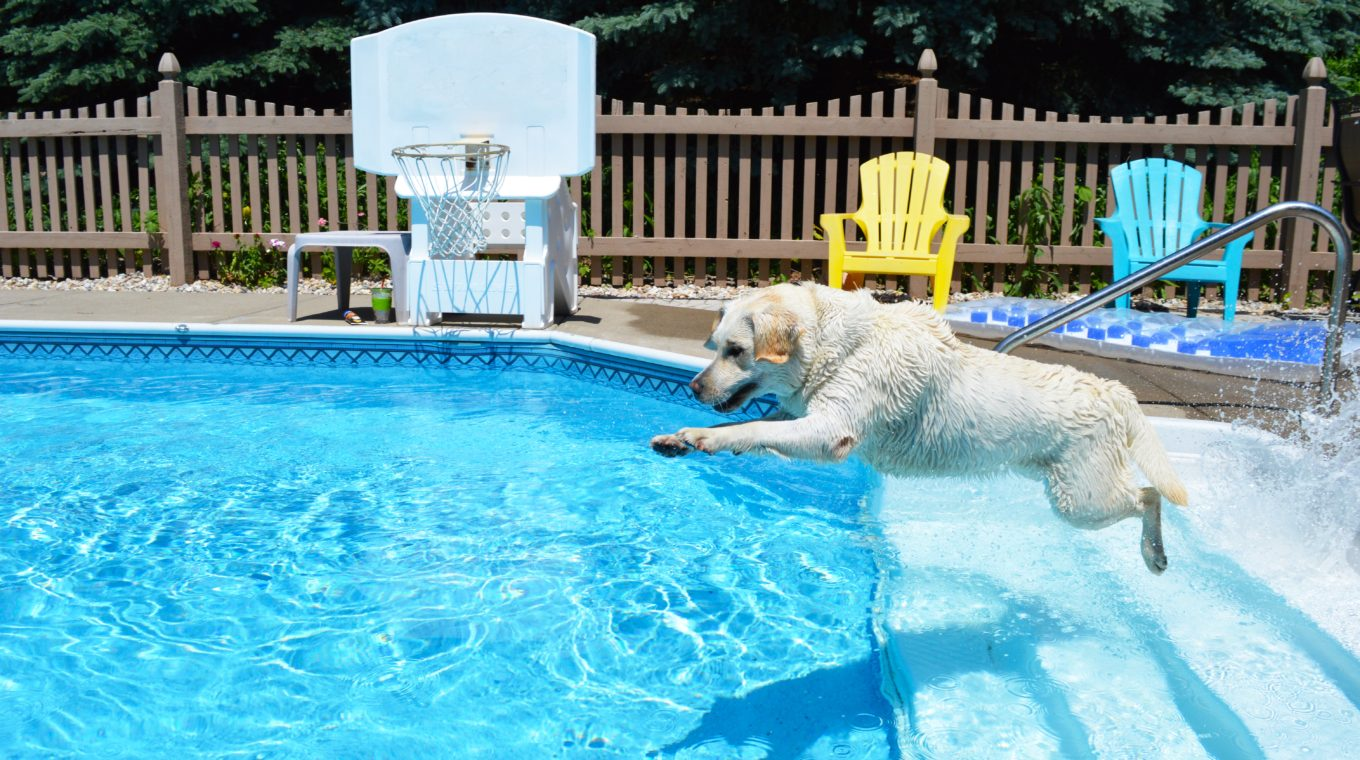 Water Safety Tips for Dogs   North Orange Animal Hospital
