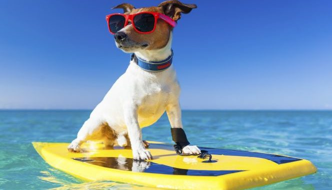 Protecting Your Pet From Summer Heat