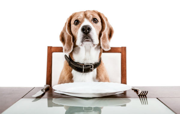 What Foods To Share And What To Keep Away From Your Dog