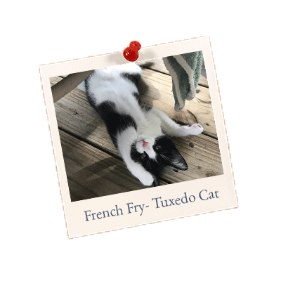 French Fry- Tuxedo Cat