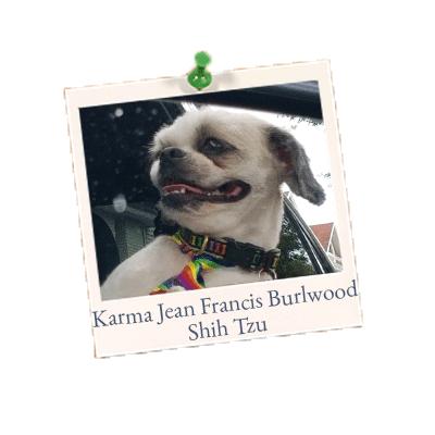 Karma Jean Francis Burlwood - Shih Tzu