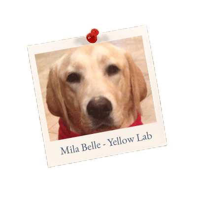 Mila Belle Yellow Lab