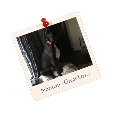 Norman Great-Dane