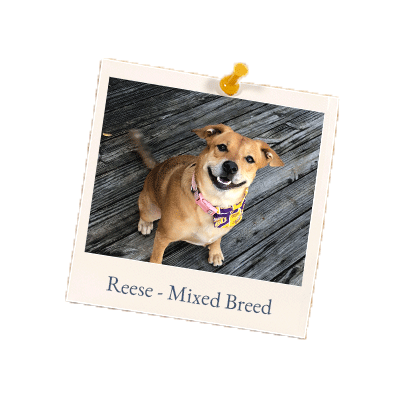 Reese-Mixed-Breed