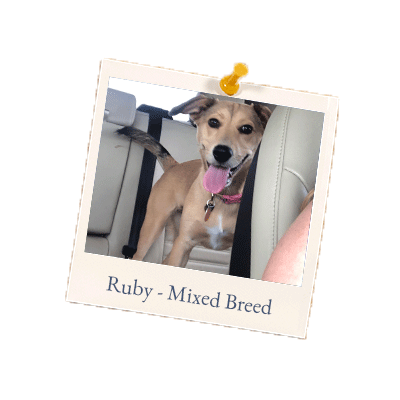 Ruby - Mixed Breed