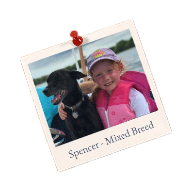 Spencer - Mixed Breed