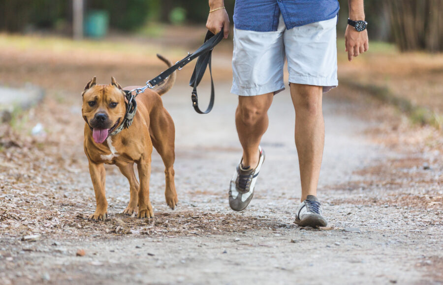 Man Walking With His Dog At Park. Close Up View On Dog And On The Legs Of The Man Holding It On Leash.