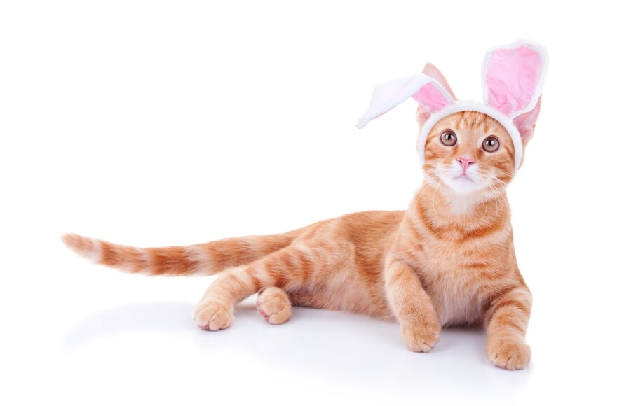Top Four Easter Hazards For Pets