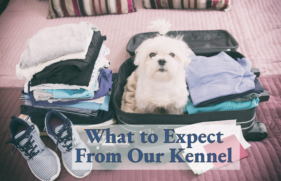 What To Expect From Our Kennel