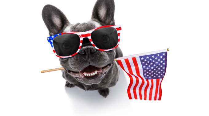 July 4 Pet Preparedness