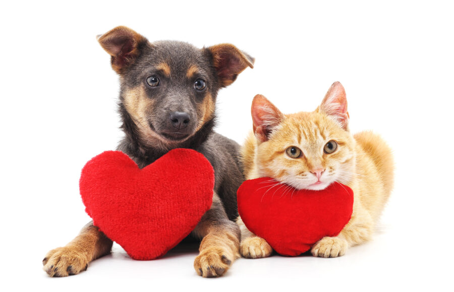 What Is Heartworm Disease ; The Basics