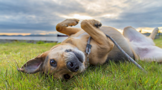 National Mutt Day: 5 Reasons To Adopt A Mutt