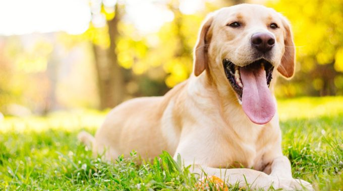 Heartworm Fast Facts