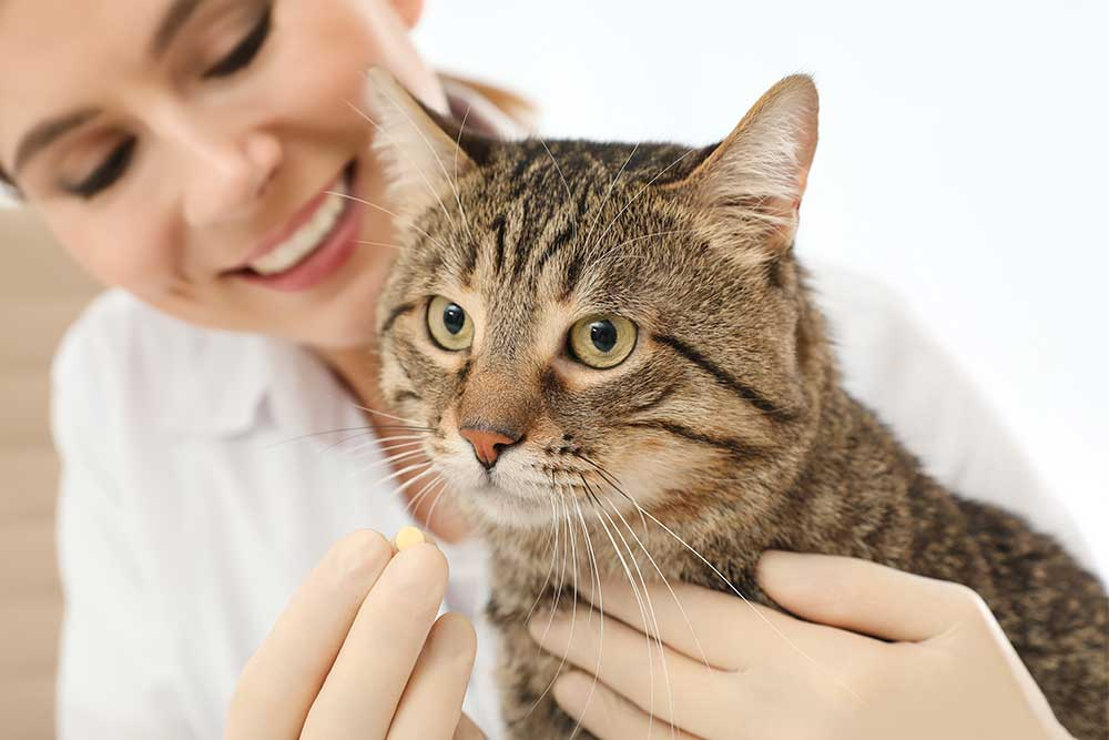 Pet Pain Management in Apopka