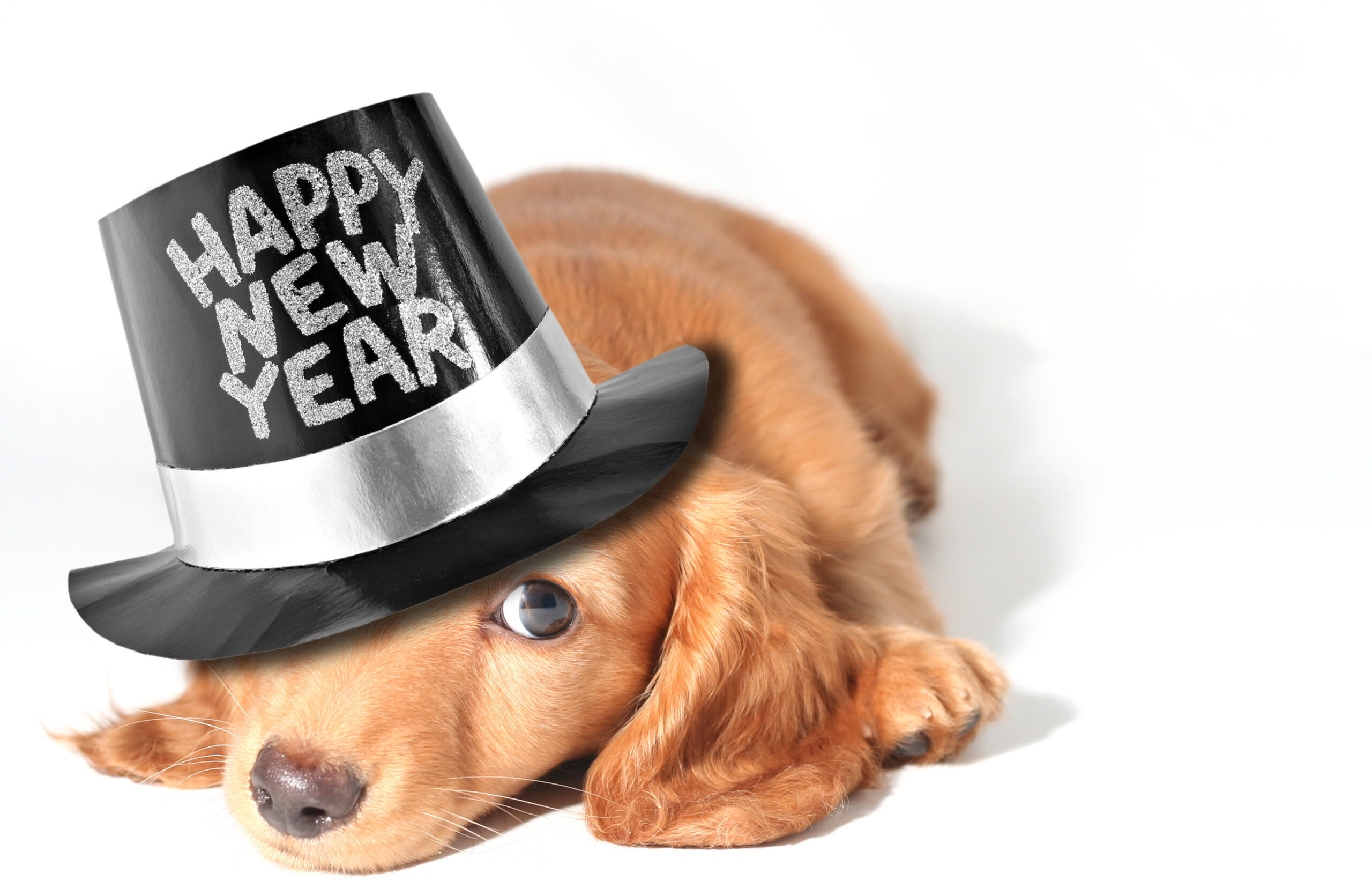 10 Tips To Keep Your Pet Calm On New Year's Eve