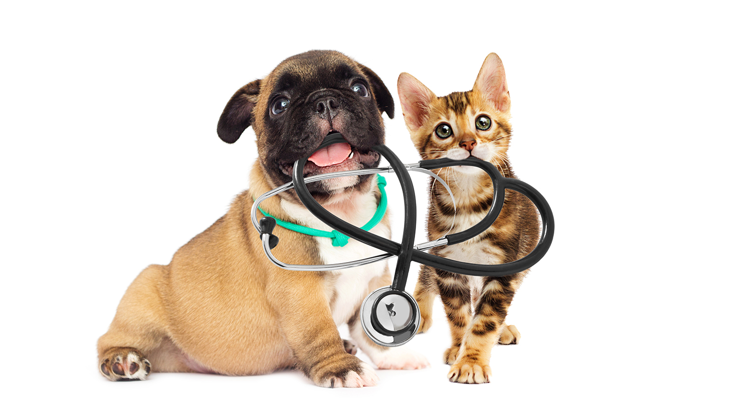 Pet Emergency Care
