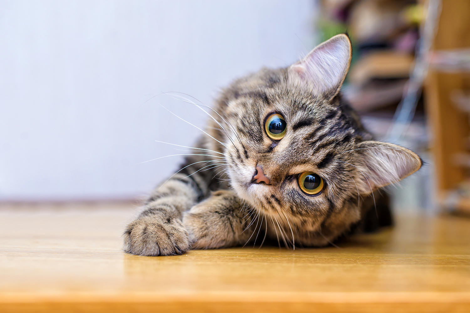 What To Consider When Adopting A Cat