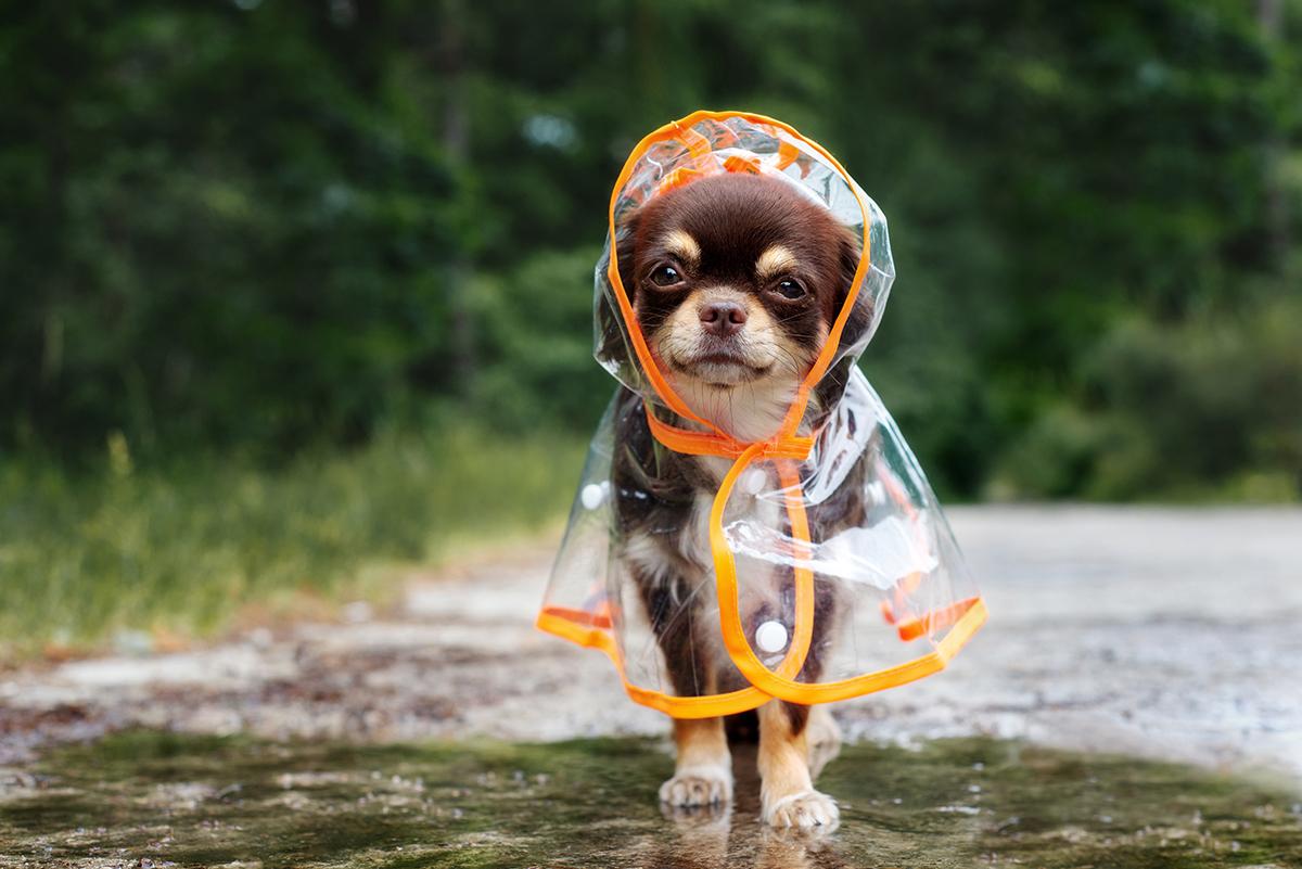 Pet Disaster Prepardness