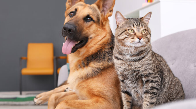 Benefits Of Spaying/Neutring Your Pet