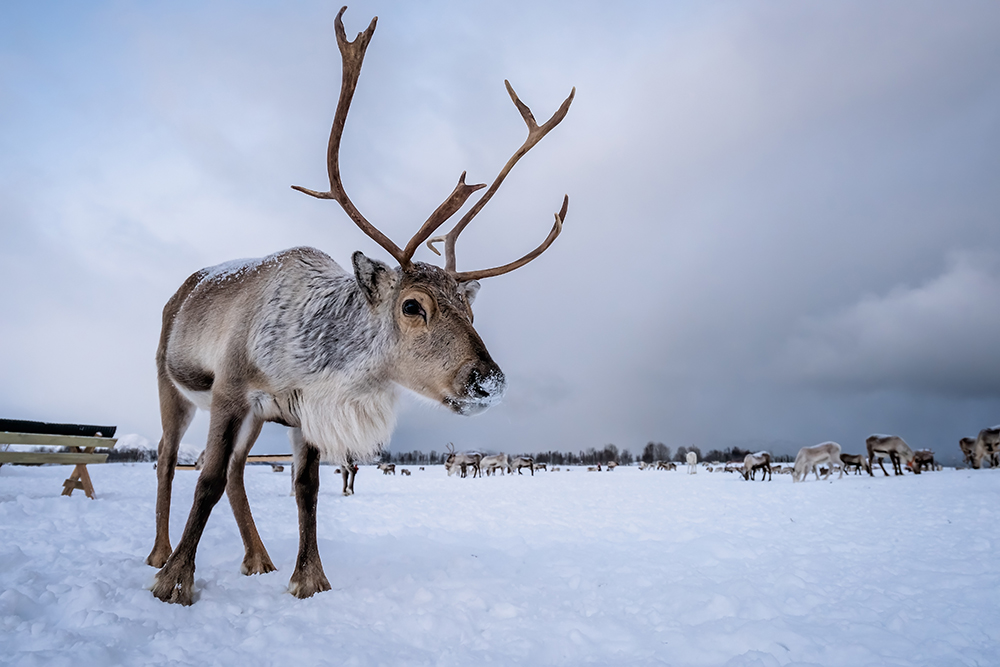 Santa's Veterinarian Answers Kids' Questions About Santa's Reindeer