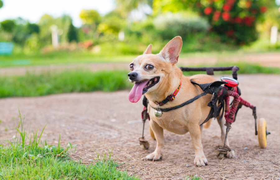 Specially-Abled Pets