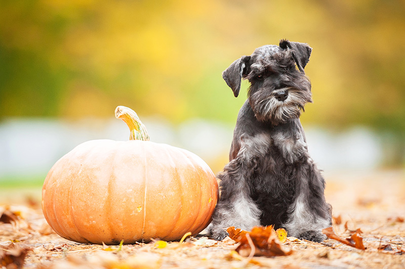 Happy Fall Ya'll: Pet Events In Central Florida